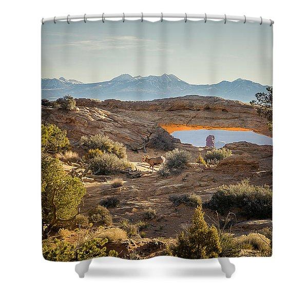 Bighorn Sheep And Mesa Arch Shower Curtain