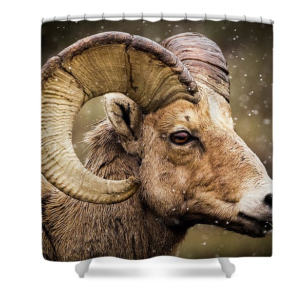 Bighorn Sheep In Winter Shower Curtain