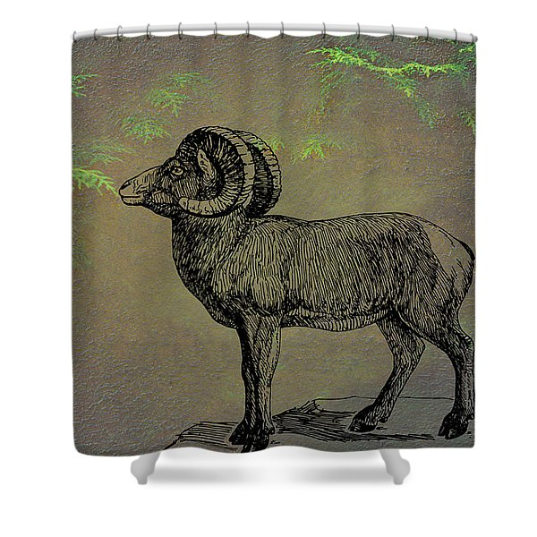 Bighorn Sheep  Shower Curtain