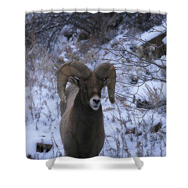 Bighorn5 Shower Curtain