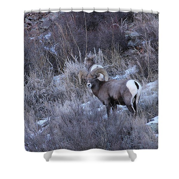 Bighorn8 Shower Curtain