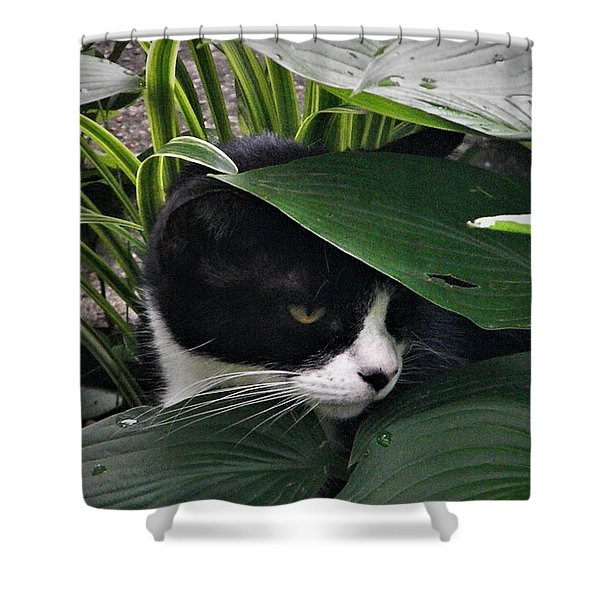Binx Our Feral Cat Shower Curtain