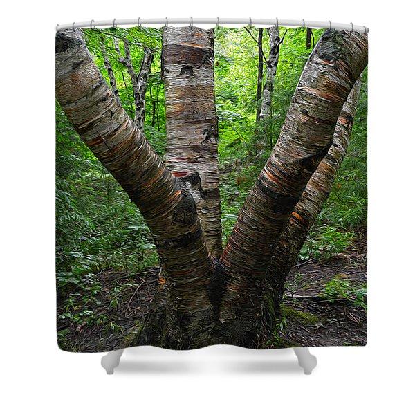 Birch Bark Tree Trunks Shower Curtain