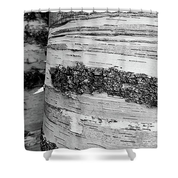 Shower Curtain featuring the photograph Birch Tree 1 by Heather Kenward