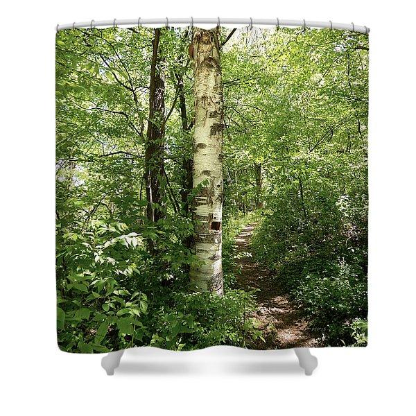 Birch Tree Hiking Trail Shower Curtain