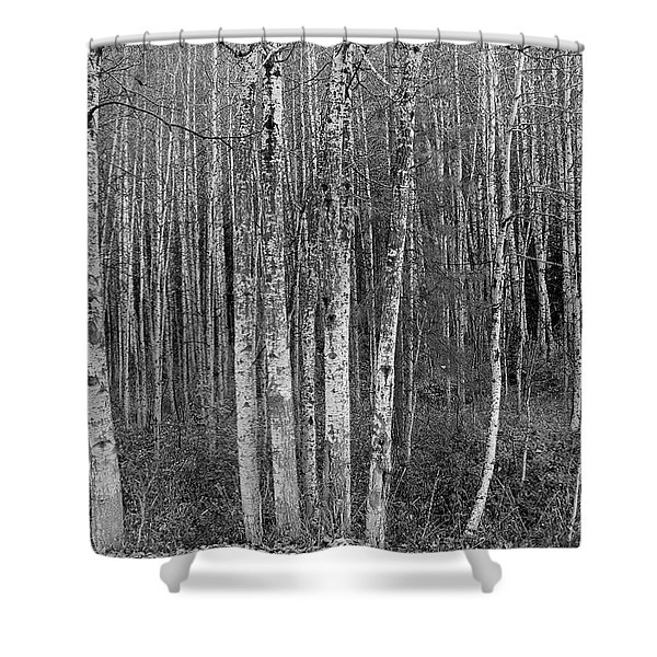 Birch Tress Shower Curtain