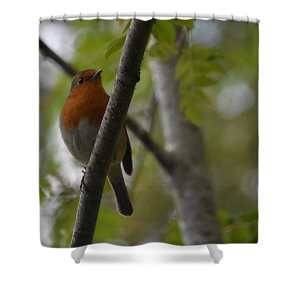 Bird Shower Curtain