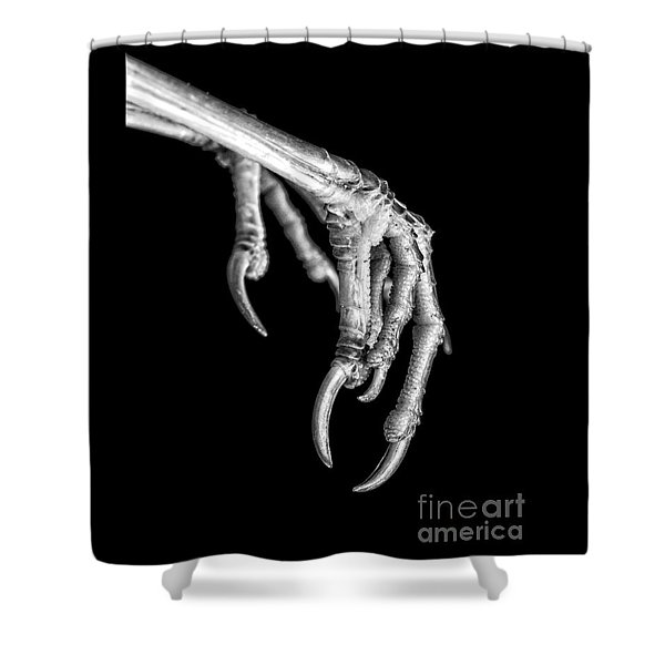 Bird Claw Black And White Shower Curtain