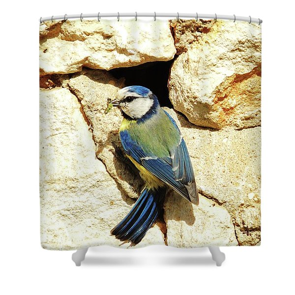 Bird Feeding Chick Shower Curtain