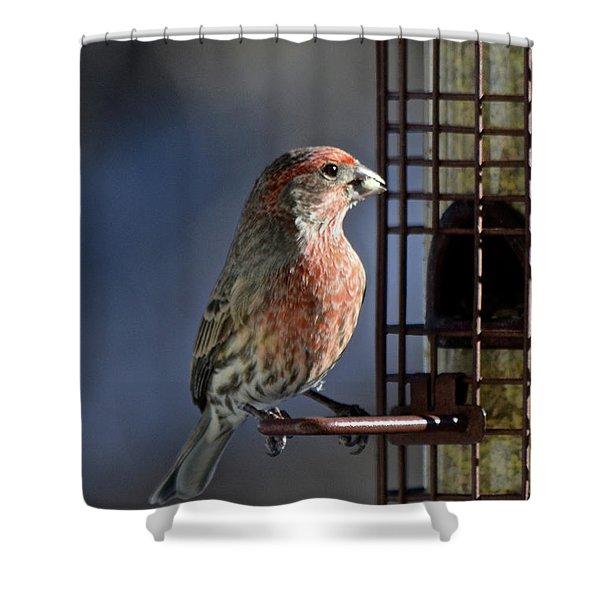 Bird Feeding In The Afternoon Sun Shower Curtain