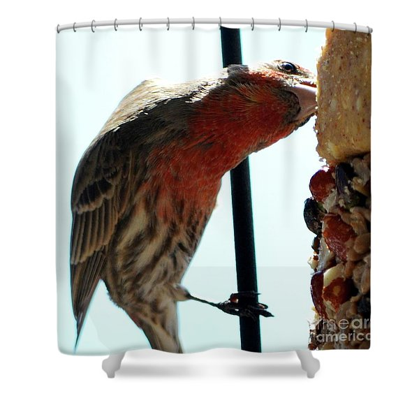 Bird Hits The Jackpot Shower Curtain