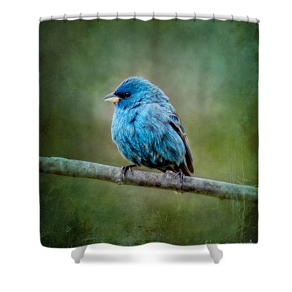 Bird In Blue Indigo Bunting Ginkelmier Inspired Shower Curtain