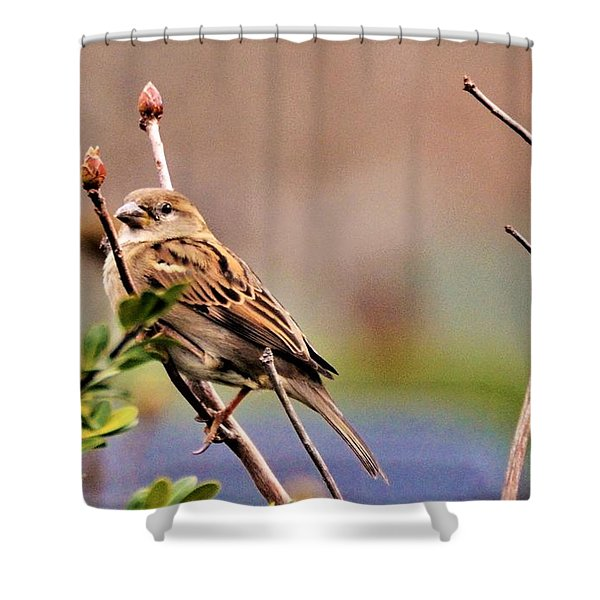 Bird In The Cold Shower Curtain