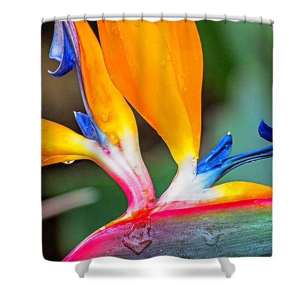 Bird Of Paradise After The Rain Shower Curtain