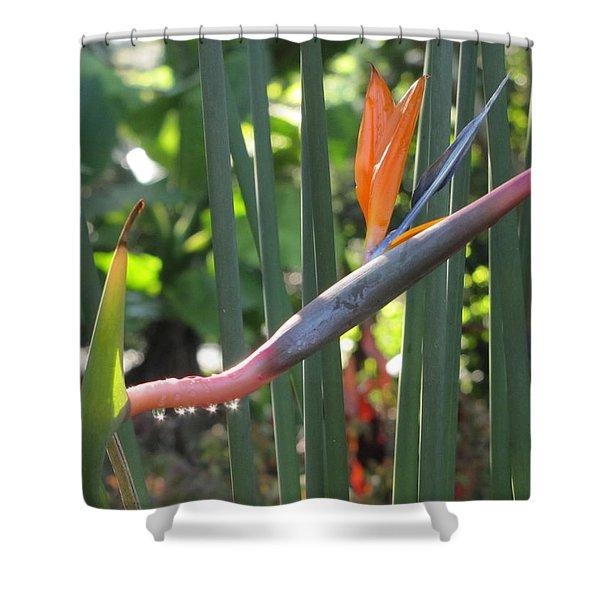 Bird Of Paradise Dripping Shower Curtain