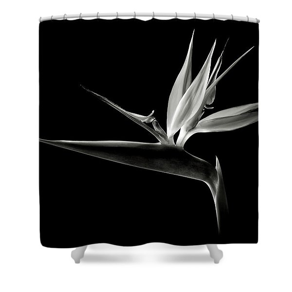Bird Of Paradise In Black And White Shower Curtain