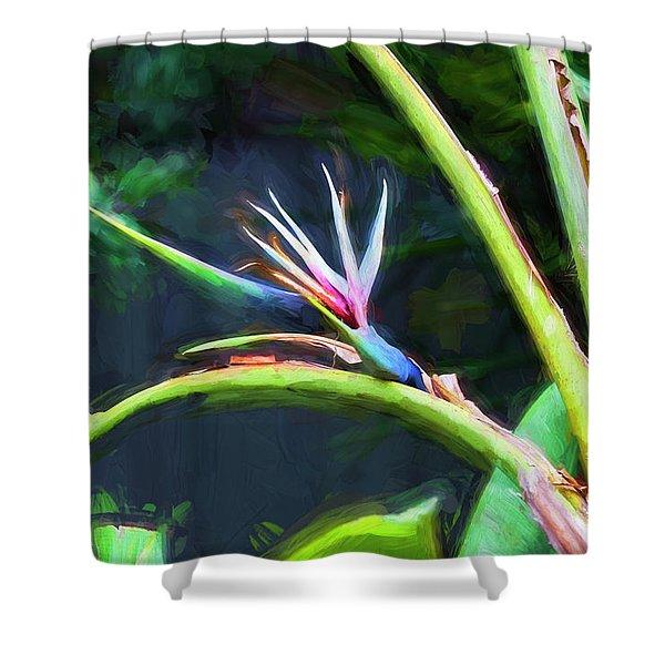 Bird Of Paradise Strelitzia Reginae 003 Shower Curtain