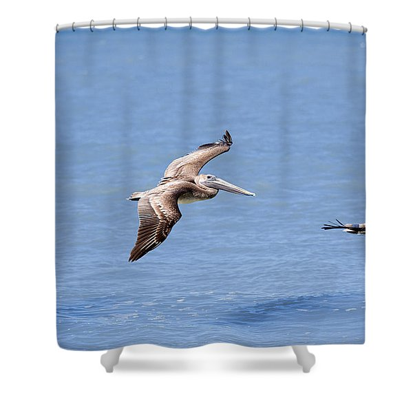 Birds 1039 Shower Curtain