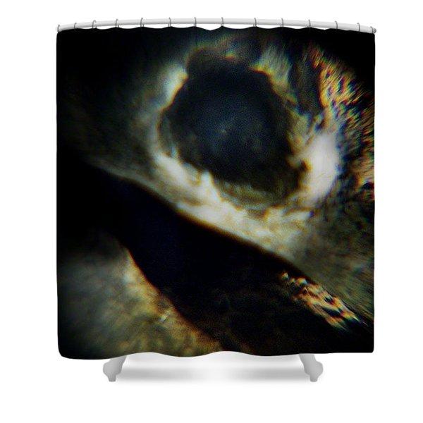 Bird's Eye Shower Curtain