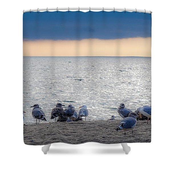 Birds On A Beach Shower Curtain