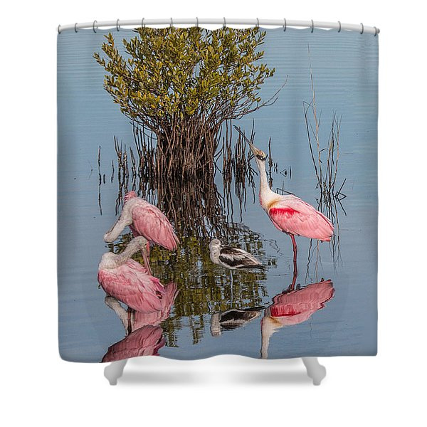 Birds, Reflections, And Mangrove Bush Shower Curtain