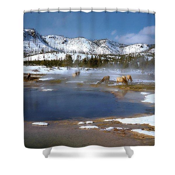 Biscuit Basin Elk Herd Shower Curtain