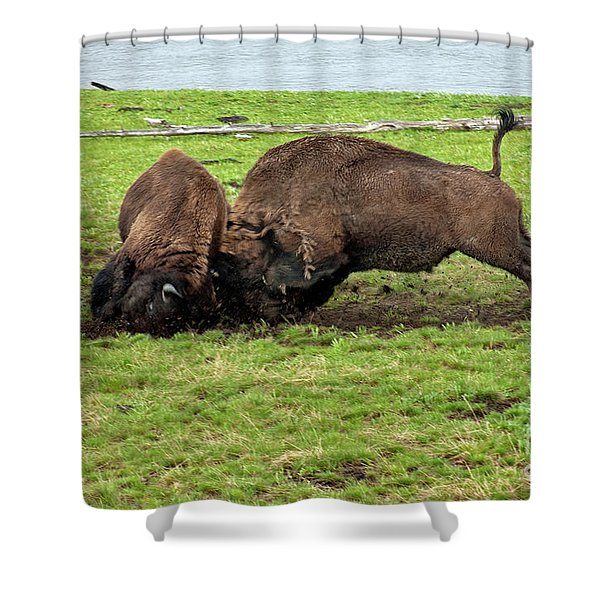 Bison Fighting Shower Curtain