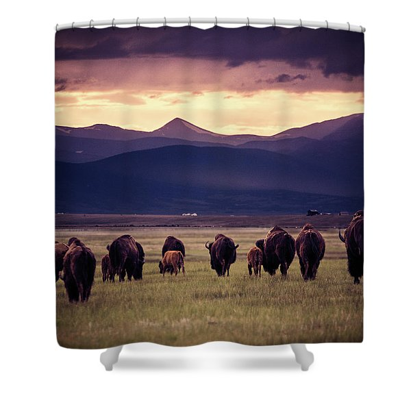 Bison Herd Into The Sunset Shower Curtain