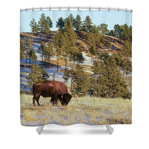 Bison In Custer State Park Shower Curtain