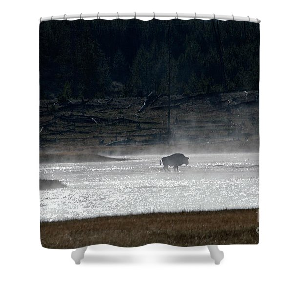 Bison In The River Shower Curtain