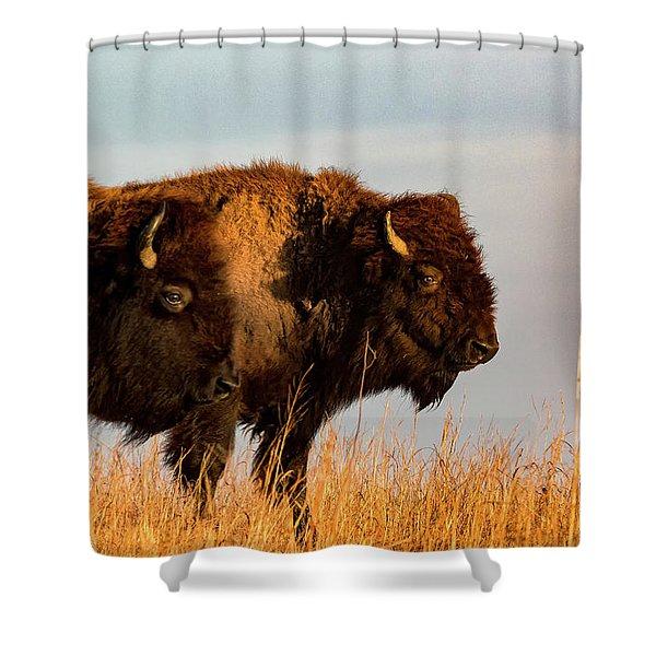 Bison Pair Shower Curtain