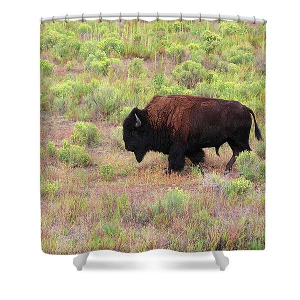 Bison1 Shower Curtain