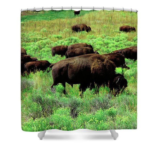 Bison2 Shower Curtain