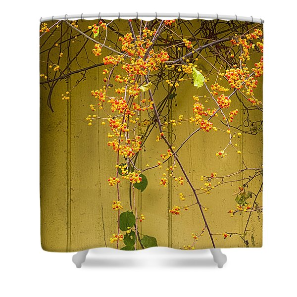 Shower Curtain featuring the photograph Bittersweet Vine by Tom Singleton