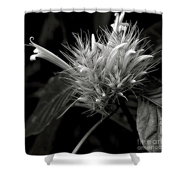 Bizarre Flower Charm Shower Curtain