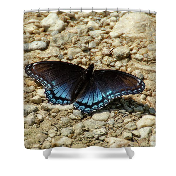 Black And Blue Monarch Butterfly Shower Curtain