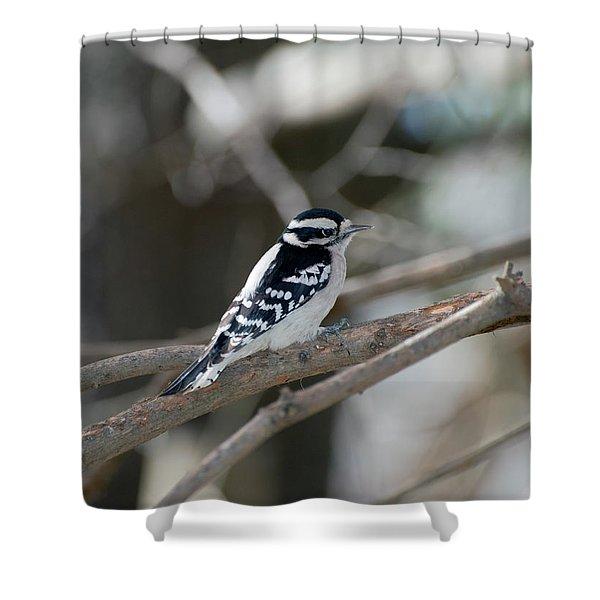 Black And White Bird Shower Curtain