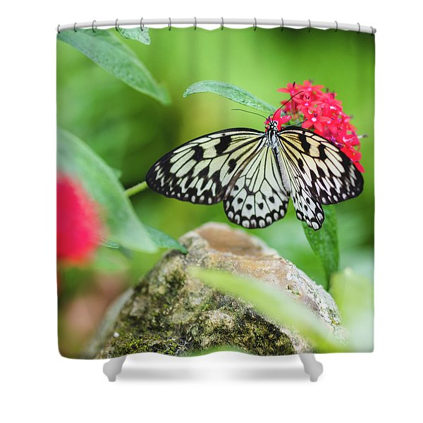Black And White Butterfly Shower Curtain