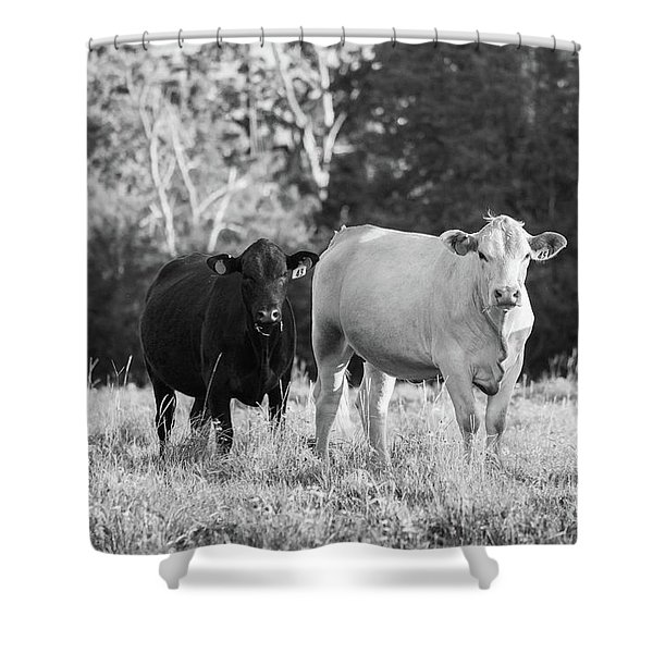 Black And White Cows Shower Curtain
