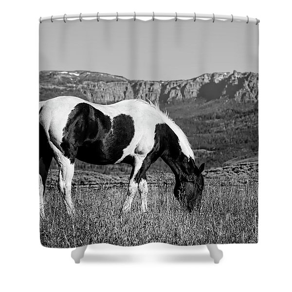 Black And White Horse Grazing In Wyoming In Black And White  Shower Curtain