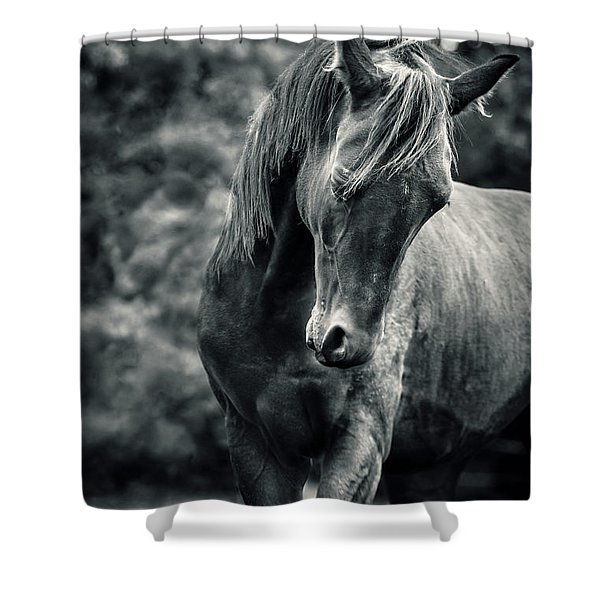 Black And White Portrait Of Horse Shower Curtain