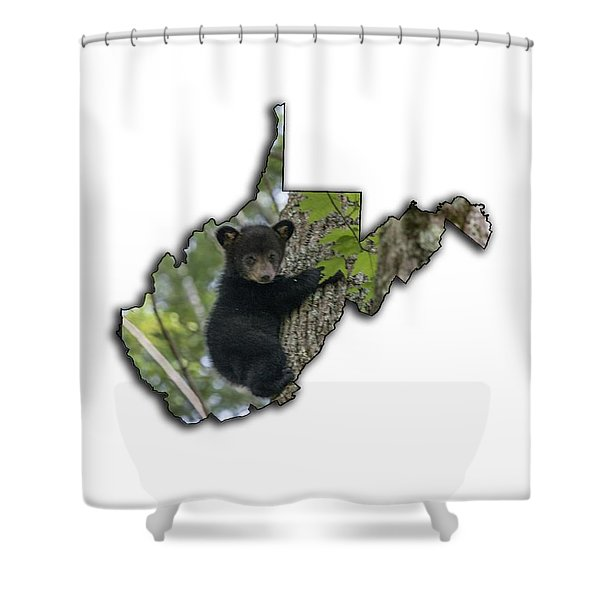 Black Bear Cub Climbing Down A Tree Shower Curtain