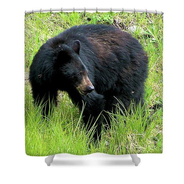 Black Bear Shower Curtain