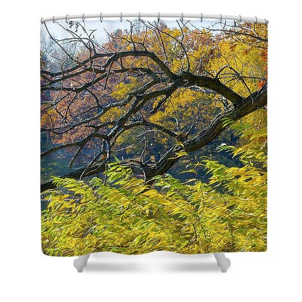Black Branches Through Bright Autumn Trees Shower Curtain