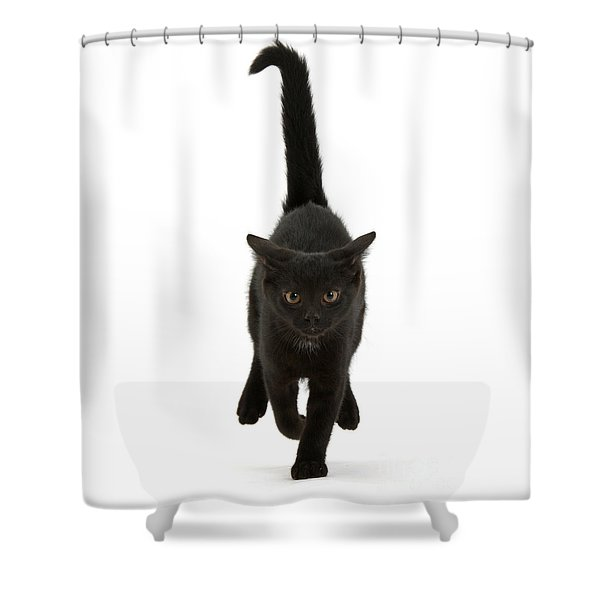 Black Cat On The Run Shower Curtain