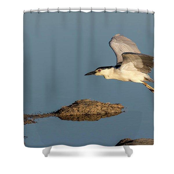 Black-crowned Night Heron 2017-4 Shower Curtain