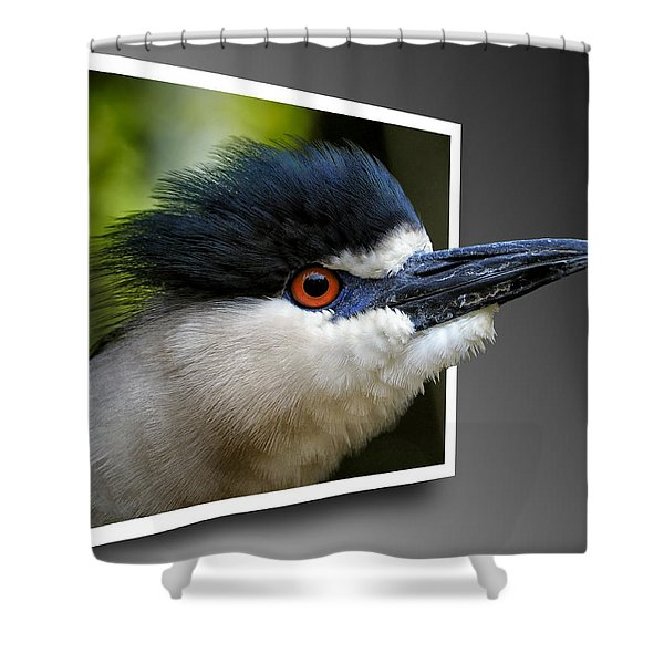 Black Crowned Night Heron Out Of Bounds Shower Curtain