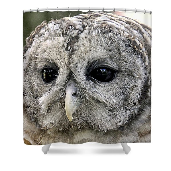 Black Eye Owl Shower Curtain