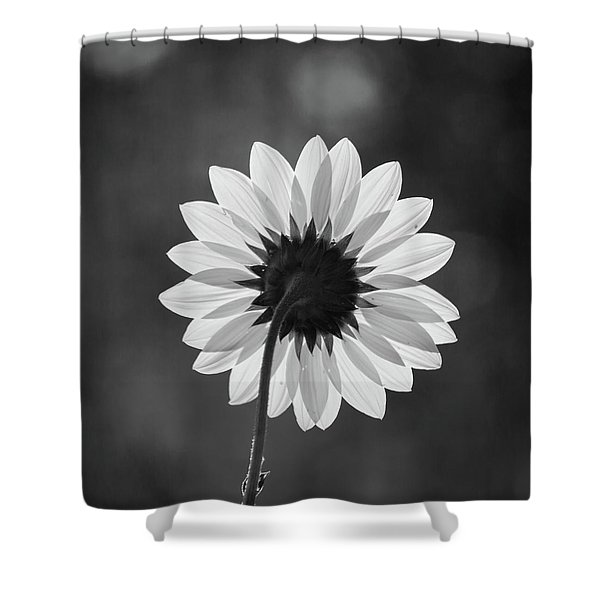 Black-eyed Susan - Black And White Shower Curtain
