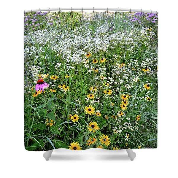 Black Eyed Susans And Company Shower Curtain